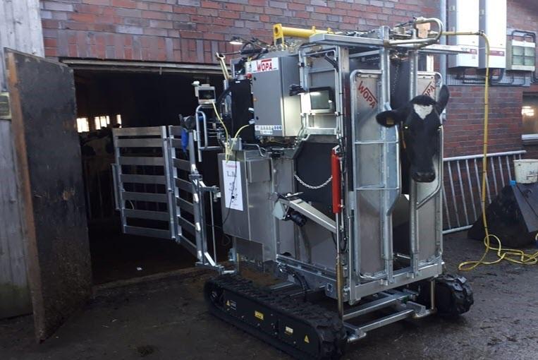 Koe in machine